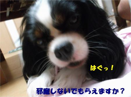 08_convert_20140807181117.jpg