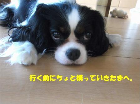 08_convert_20140820170829.jpg