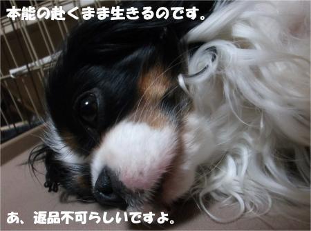 09_convert_20140509193010.jpg