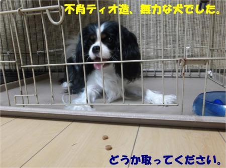 09_convert_20140703183120.jpg