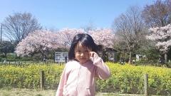 harunasakura2_2014041012300157b.jpg