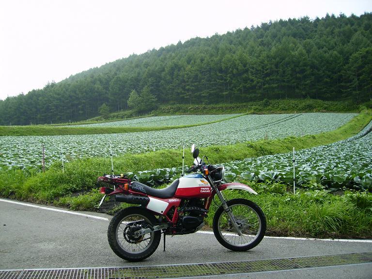 20140814草津温泉行きキャベツ畑