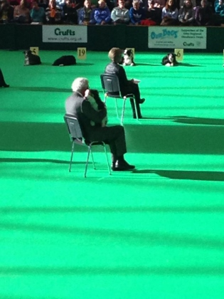 crufts2014stay (315x420)