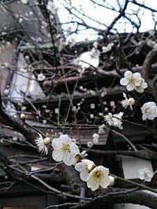 fc2_2014-03-06_15-49-56-876.jpg