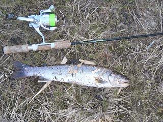 岩魚40cm