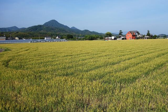 140524-yamagoe01-014-S.jpg