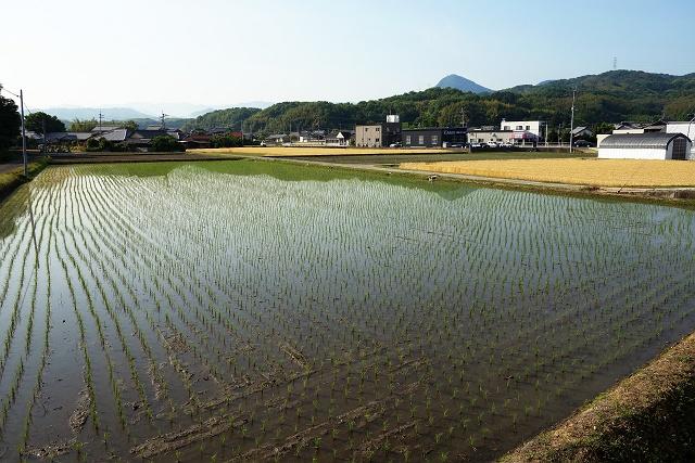 140524-yamagoe01-016-S.jpg