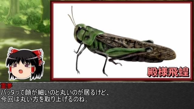 ゆっくり霊夢とやる夫が学ぶ 昆虫大百科 part16