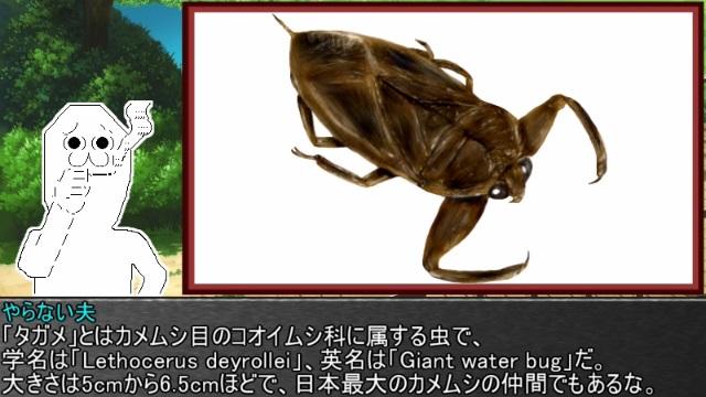 ゆっくり霊夢とやる夫が学ぶ 昆虫大百科 part18