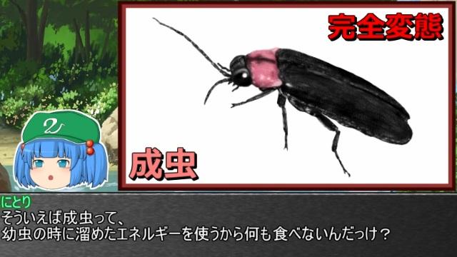 ゆっくり霊夢とやる夫が学ぶ 昆虫大百科 part20