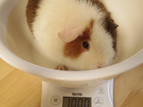 体重測定2014年2月23日3