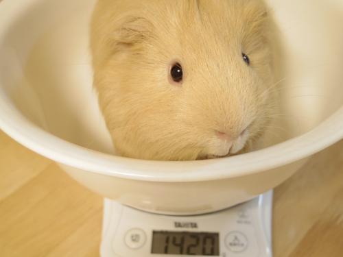 体重測定2014年2月23日1