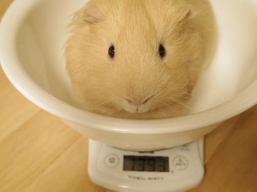 体重測定2014年3月2日1
