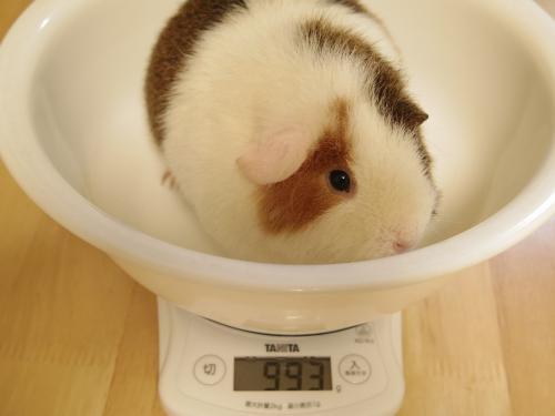 体重測定2014年3月9日2