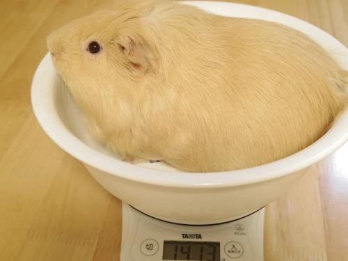 体重測定2014年3月9日1