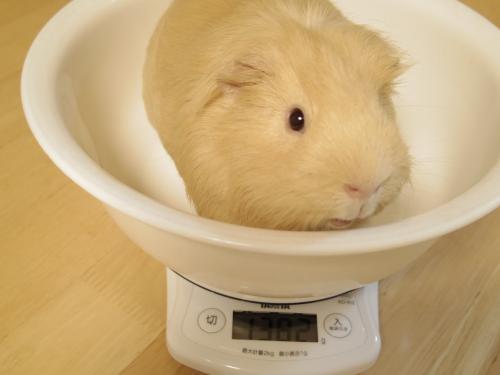 体重測定2014年3月23日1
