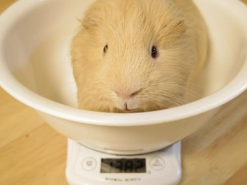 体重測定2014年3月30日1