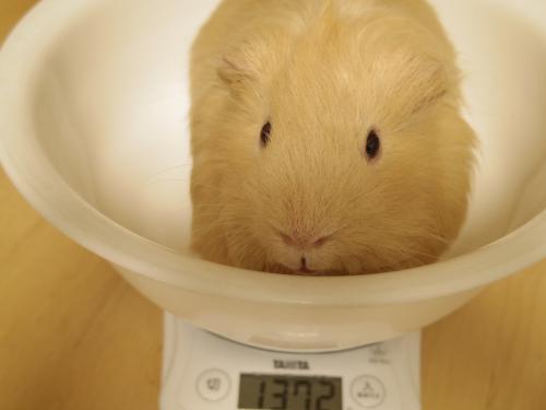 体重測定2014年5月4日1