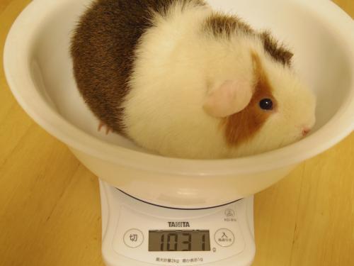 体重測定2014年5月4日2