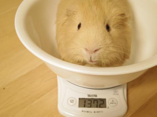 体重測定2014年5月11日3