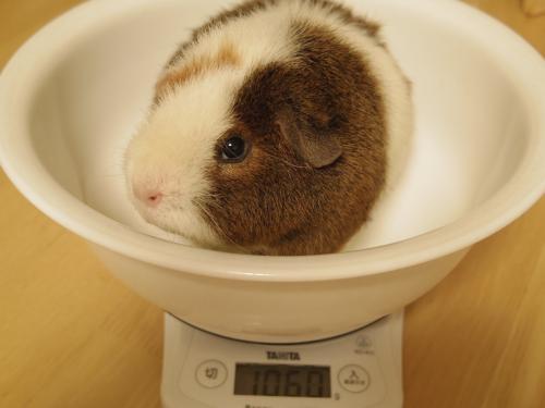 体重測定2014年5月18日2