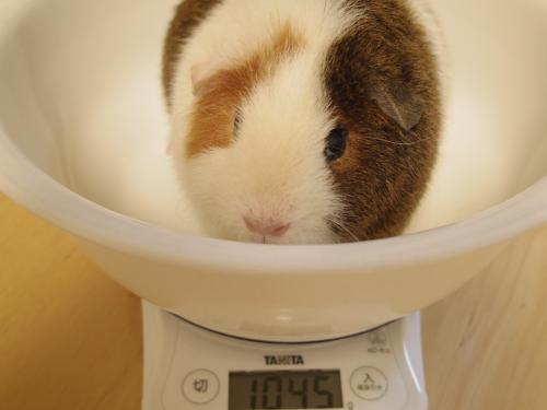 体重測定2014年5月25日2