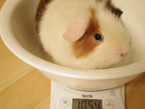 体重測定2014年6月1日3