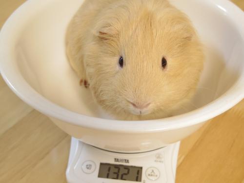 体重測定2014年6月8日1