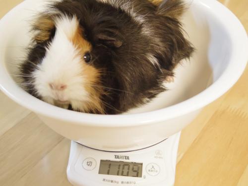 体重測定2014年6月8日3