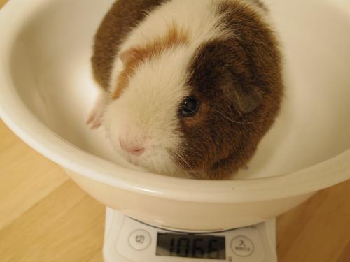 体重測定2014年6月15日3