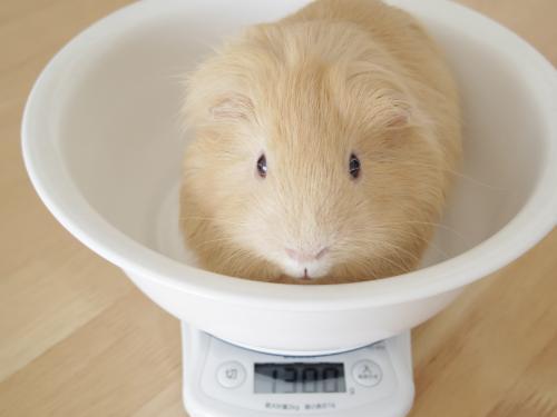 体重測定2014年6月23日1