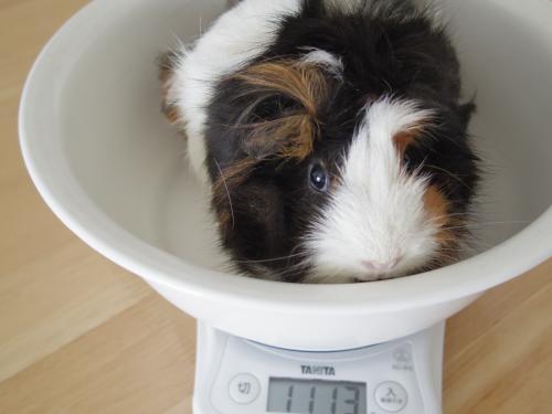 体重測定2014年6月29日1
