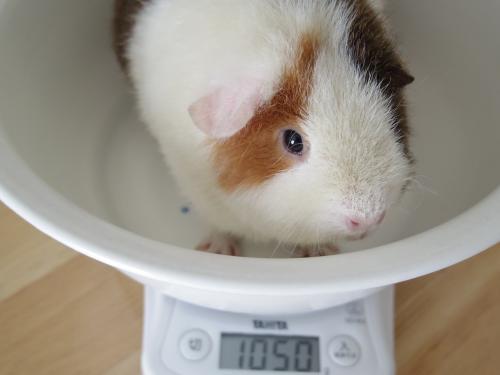 体重測定2014年6月29日2
