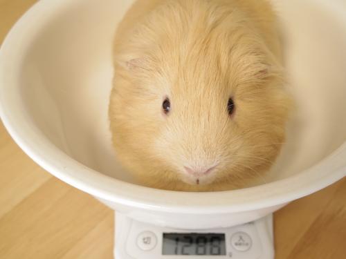 体重記録2014.6.30~7.7 1
