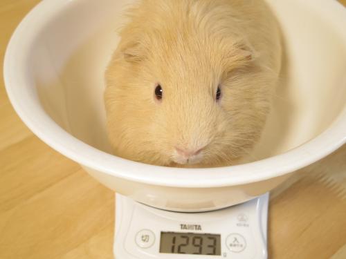 体重測定2014年7月13日1