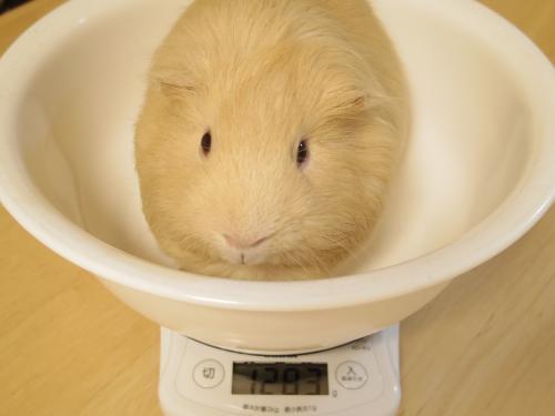 体重測定2014年7月27日1