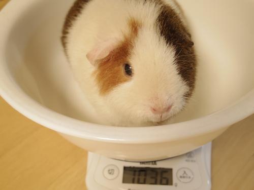 体重測定2014年7月27日3