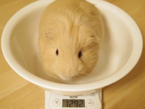 体重測定2014年8月10日1