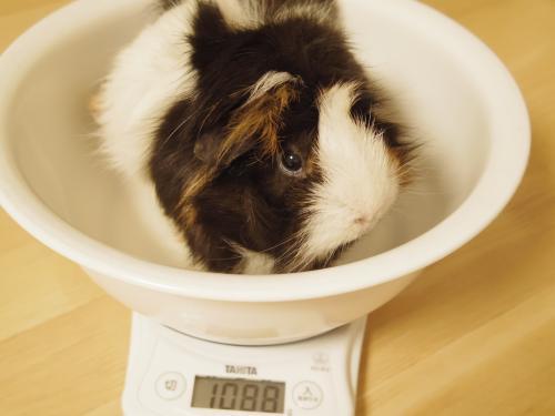 体重測定2014年8月10日3