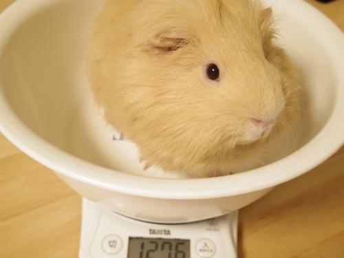 体重測定2014年8月24日1