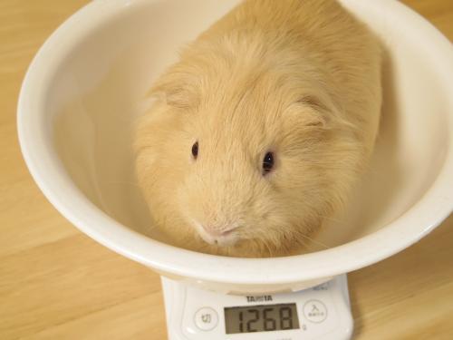 体重測定2014年8月31日1