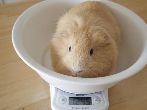 体重測定2014年9月8日1