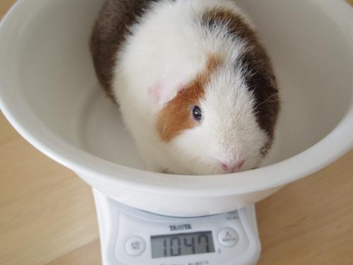 体重測定2014年9月8日3