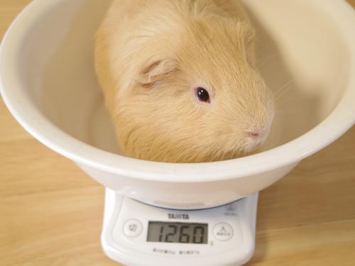 ハルちん風呂&体重測定5