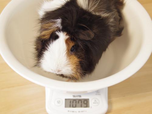 ハルちん風呂&体重測定6