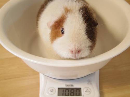 ハルちん風呂&体重測定7