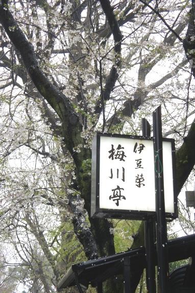 2014上野花見 伊豆栄梅川亭