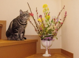 お花と小次郎