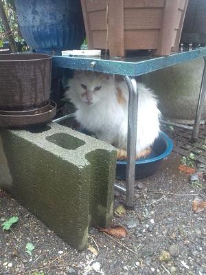 猫ちゃん雨宿り