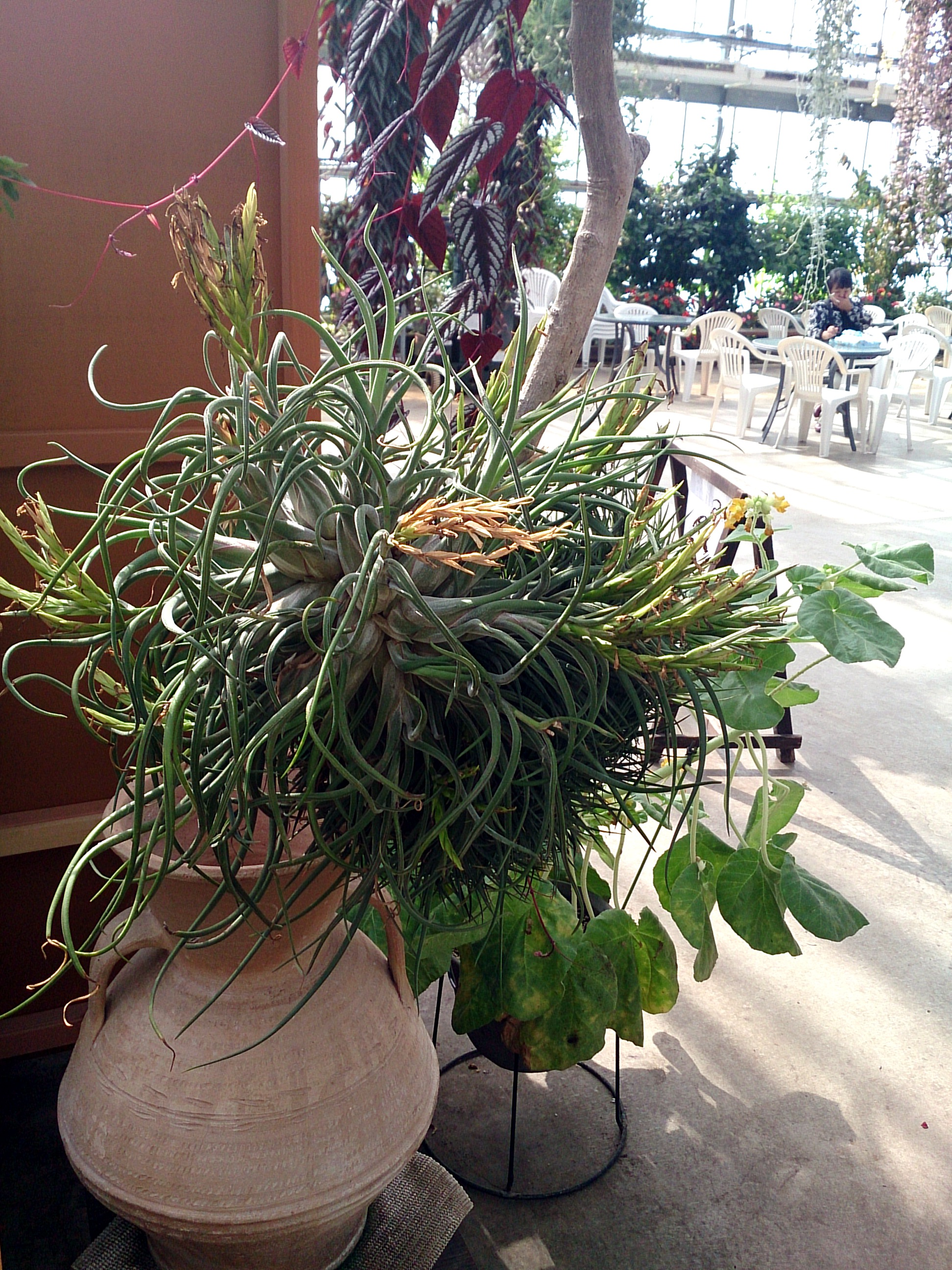 AirPlants_20140913-04.jpg